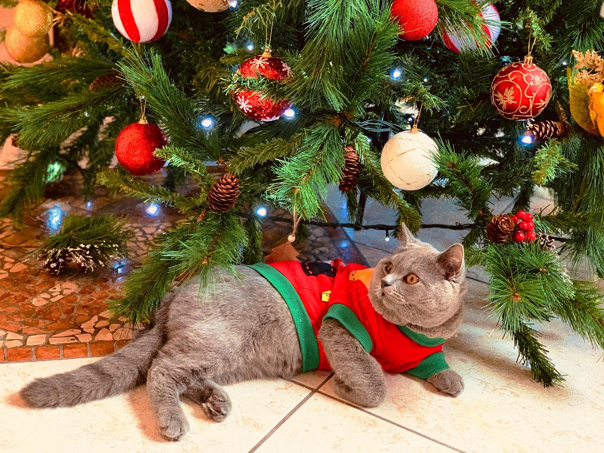 Chistes de navidad para contar en noche buena